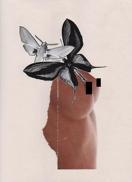 papillons - copie copie