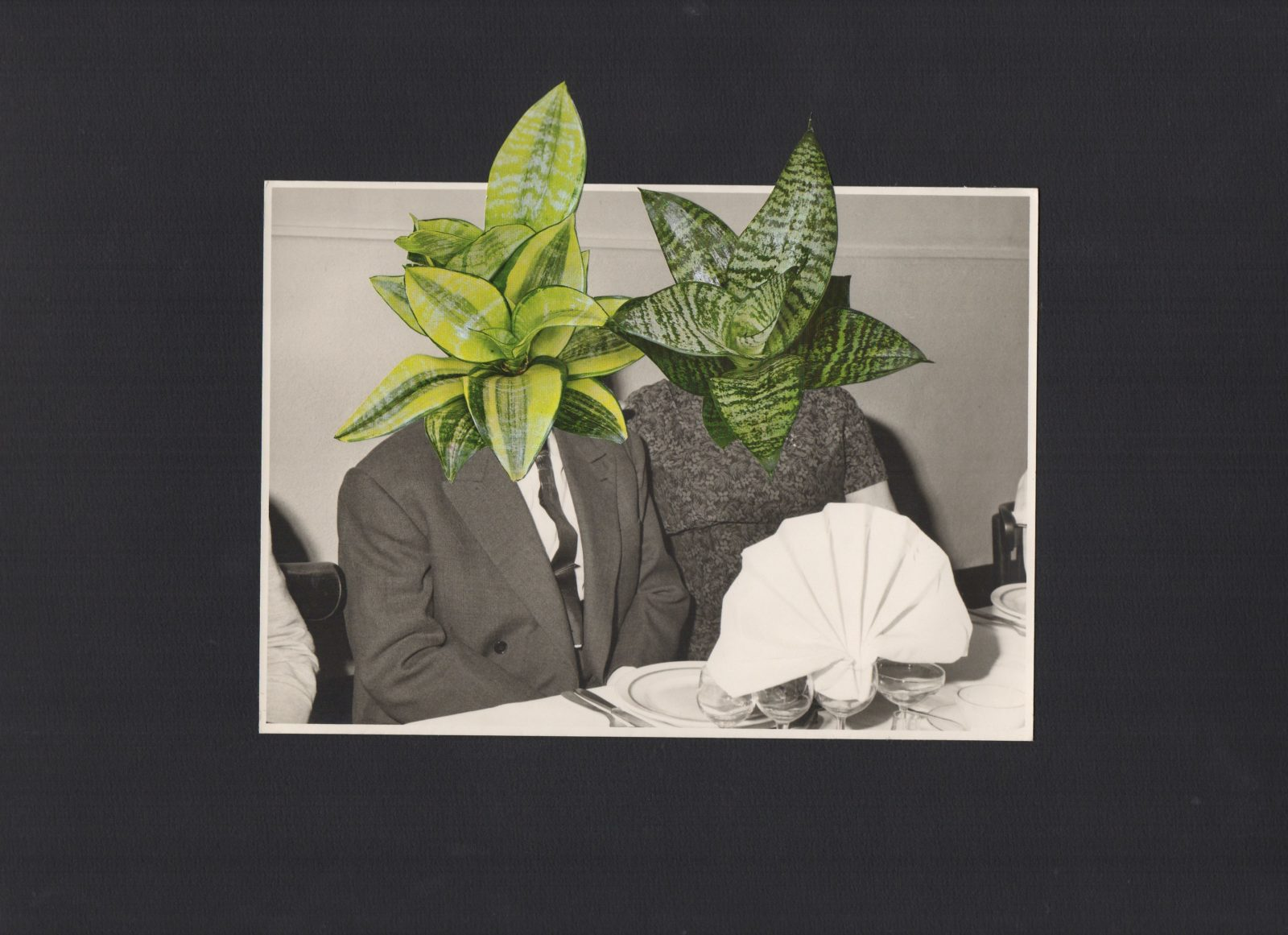 couple plante